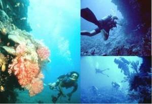 pulau pantara - Diving 2