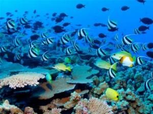 Pulau alam kotok - Biota laut