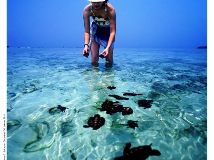 Pulau Pramuka - Penyu