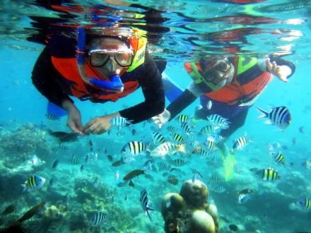 Snorkling di Pulau Seribu