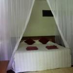 room-rimba