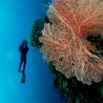 diving-wakatobi2