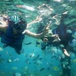pari snorkeling