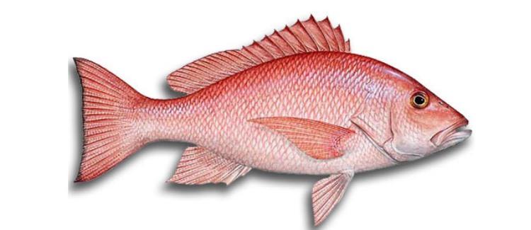 Nama Dan Jenis Ikan Laut Yang Ada Di Kepulauan Seribu
