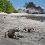 Pulau Komodo (7)